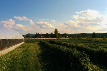 farm-tremblant1